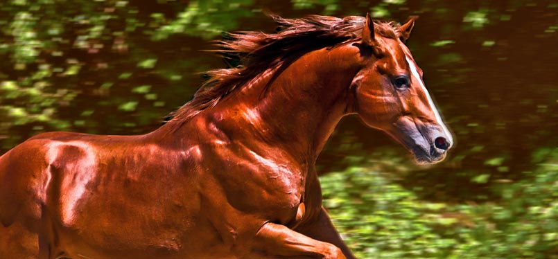 Galloping horse as a symbol for full potential.